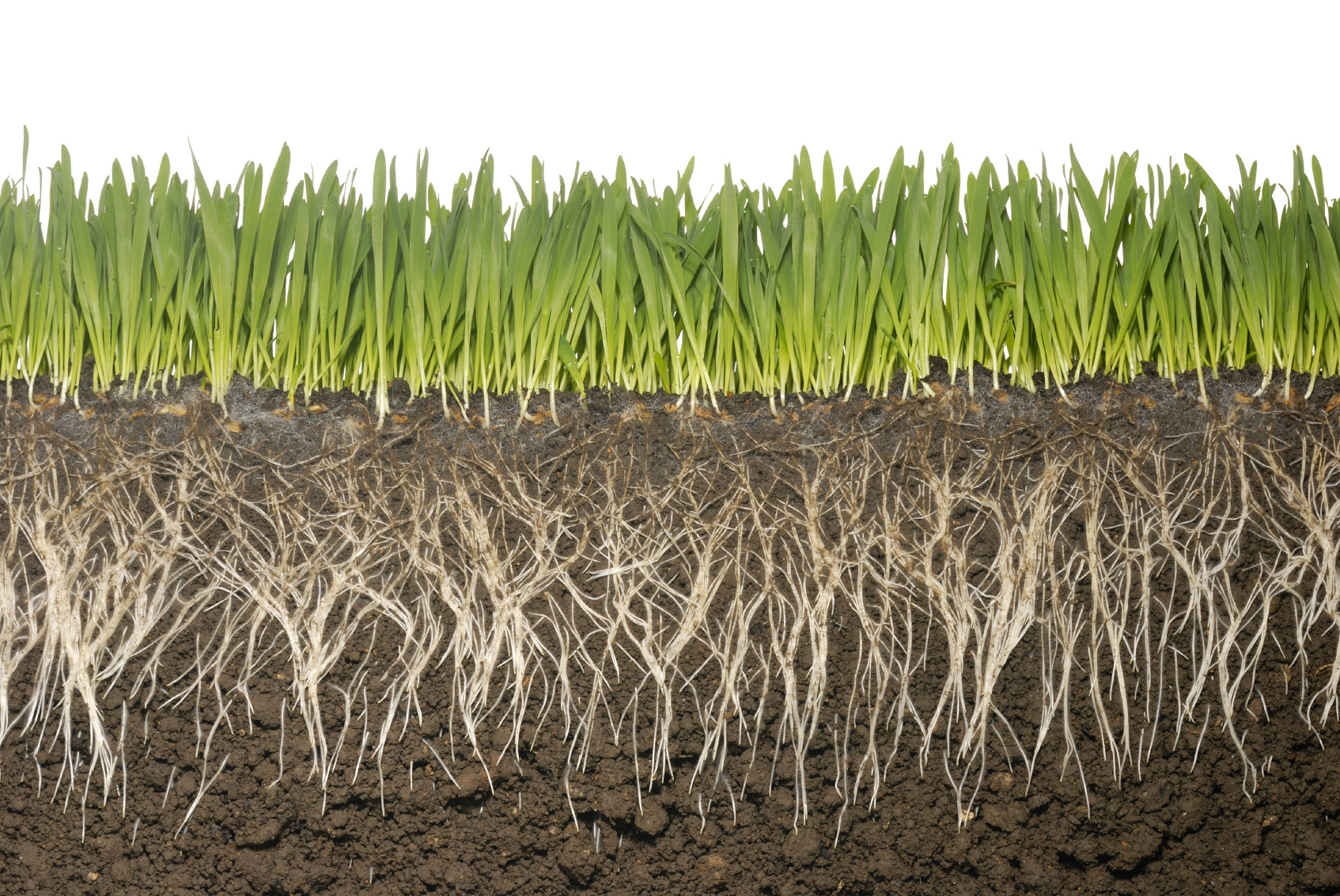 What is a Grass Plant? - Grassmasters